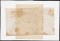 Tapirus americanus - skelet - 1700-1880 - Print - Iconographia Zoologica - Special Collections University of Amsterdam - UBA01 IZ22000277.tif