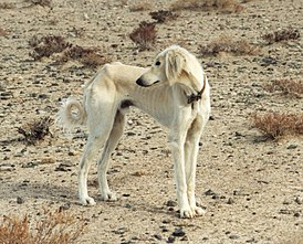 породы собак википедия фото