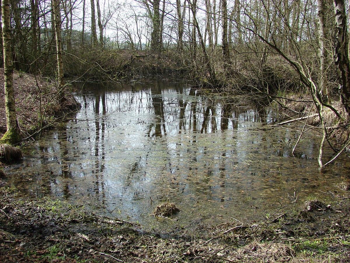 Moor bei gerdehaus wikipedia for Fischteich schutz