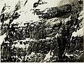 Teleaufnahme der itl.Kanzel-Bavha. 4fach 80cm Brennweite Stpkt, Kleiner Schlichtl. 25-2.1917. (BildID 15498986).jpg