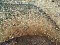 Tell Megiddo Preservation 2009 015.JPG
