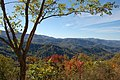 Tellico River Road Cherokee National Forest.jpg