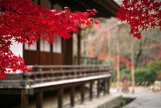 Tenryū-ji - Autumn foliage on the grounds of Tenryū-ji