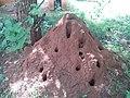 Termite Hill in Salem District.jpg