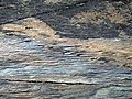 Tetrapod Trackway - geograph.org.uk - 530336.jpg