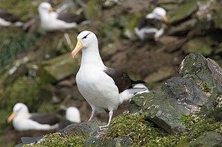 Introduced mammals on seabird breeding islands
