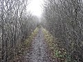 Thames Path, south of Radley, Oxfordshire.jpg