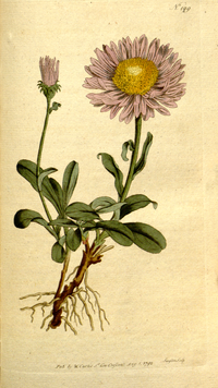 The Botanical Magazine, Plate 199 (Volume 6, 1793).png