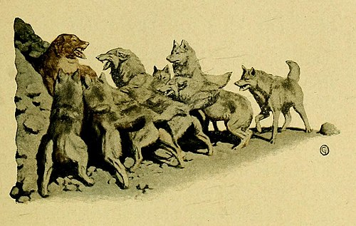 The Call of the Wild (1903) p. 67 The Dominant Primordial Beast.jpg