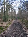 The Lord's Walk in Great Leybourne Wood - geograph.org.uk - 1200204.jpg