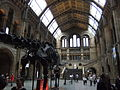 The Natural History Museum, London - DSCF0384.JPG