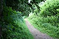 The Ring Ditch path at Wandlebury - geograph.org.uk - 850688.jpg