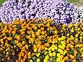 The TNU Botanical Garden in Simferopol, Crimea, Ukraine 13.JPG