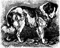 The animals of the world. Brehm's life of animals; (1895) (20587229539).jpg