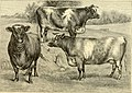 The breeds of live stock, and the principles of heredity (1887) (14594712507).jpg