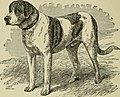 The dogs of Great Britain, America, and other countries (1919) (20368732743).jpg