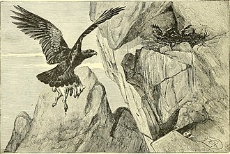 Richard Lydekker - Golden eagle bringing prey to the aerie, in The Royal Natural History, signed by Joseph Wolf