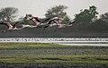 Thol Lake - Gujarat, India - Flickr - Emmanuel Dyan (3).jpg