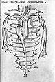 Thoracic veins, by Vesalius. Wellcome L0001199.jpg