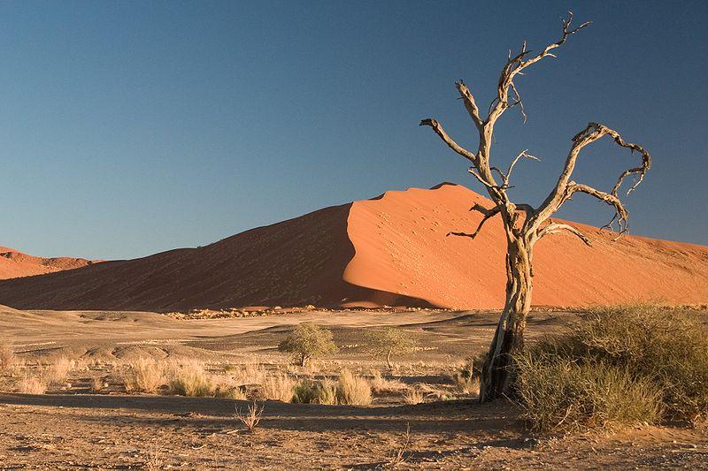 Thorn Tree Sossusvlei Namib Desert Namibia Luca Galuzzi 2004a.JPG