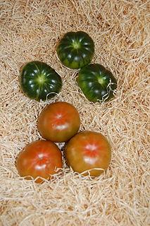 Raf tomato