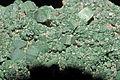 Torbernite, quartz fumé 1.jpg