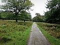 Track in Longshaw Country Park - geograph.org.uk - 2614696.jpg