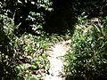 Trail - panoramio (9).jpg