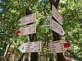 Trails in Bory Tucholskie National Park (2).jpg