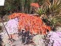 Trauttmansdorff gardens - Aloe vera 01.JPG