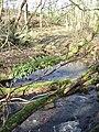 Tree Ferns - geograph.org.uk - 350583.jpg