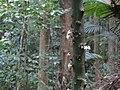 Tree flowers (4442280283).jpg