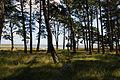 Trees (3900618940).jpg