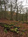 Trees - panoramio (76).jpg