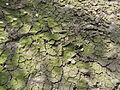 Trocker Boden - Soil IMG 1703.JPG