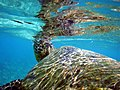 Turtle broken surface for air.jpg