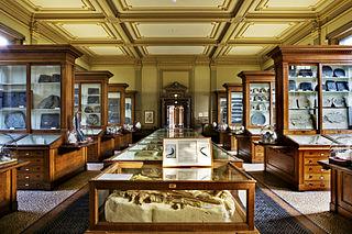 320px-Tweede_Fossielenzaal_Teylers_Museu
