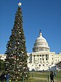 US Capitol Christmas tree 2008 east-d.jpg