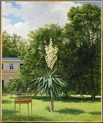 Le Yucca gloriosa fleuri en 1844 dans le parc de Neuilly