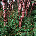 Understory vegetation.jpg