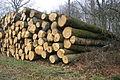 Une vue plus importante sur l'exploitation des bois et très rare en abattage actuelle..jpg