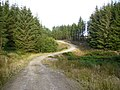 Unmapped forestry road in Langdale Forest - geograph.org.uk - 527795.jpg