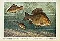 Unsere Süßwasserfische (Tafel 34) (6102603043).jpg