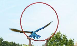Weltvogelpark Walsrode - Image: VPW Flugvorführung Reifen