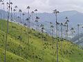 Valle Cocora, Kolumbien (13158791433).jpg