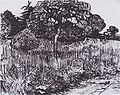 Van Gogh - Blick in den Park von Arles.jpeg