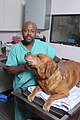 Veterinary Technician - DPLA - d1729fc7e194192fa5ad297d387d32da.jpg