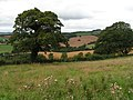 View from Raddon Hills looking north - geograph.org.uk - 1444224.jpg