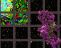 View of Art planet from spacebus window with purple plant.png