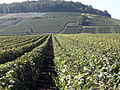 Vigne Pinot Noir (Cerseuil) Cl.J.Weber09 (23595273431).jpg